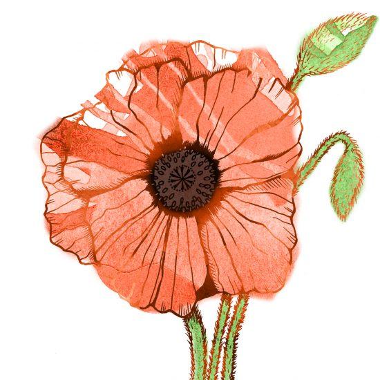 Garden Sunshine poppy illustration; © Charm Design Studio