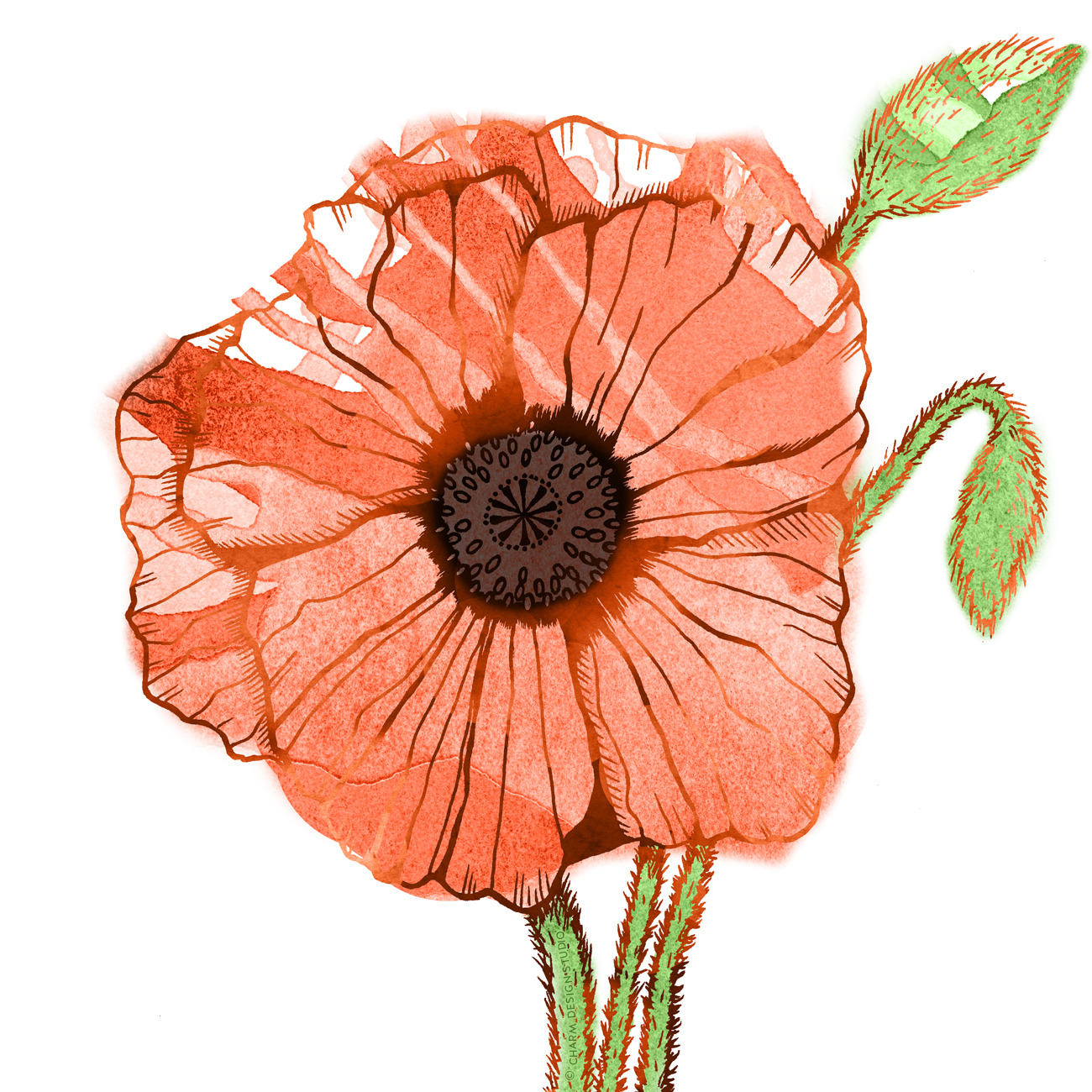 Garden Sunshine poppy illustration; © Charm Design Studio