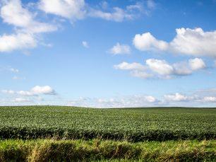 August Field; © Pixelumina
