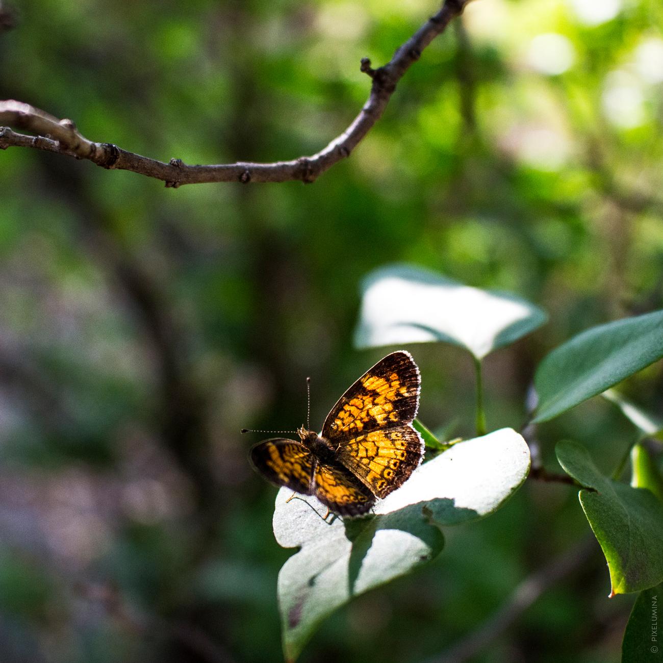 Bokeh Leaf Moth; © Pixelumina